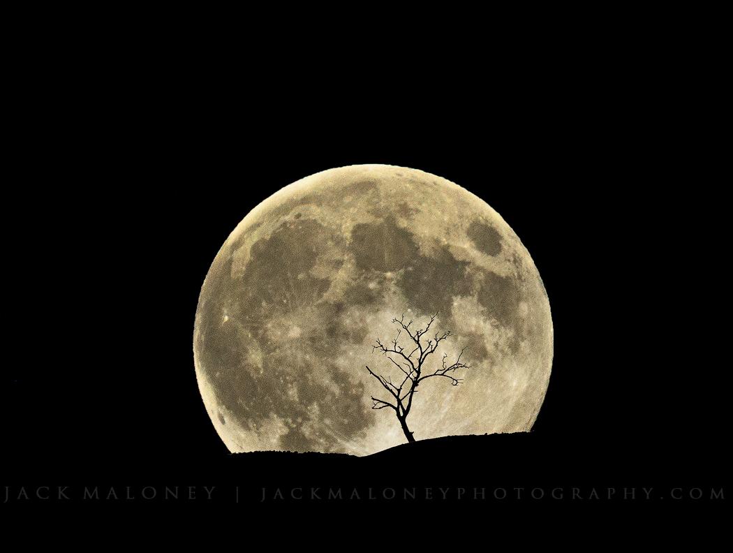 1_Jack_Bad-Moon-Rising