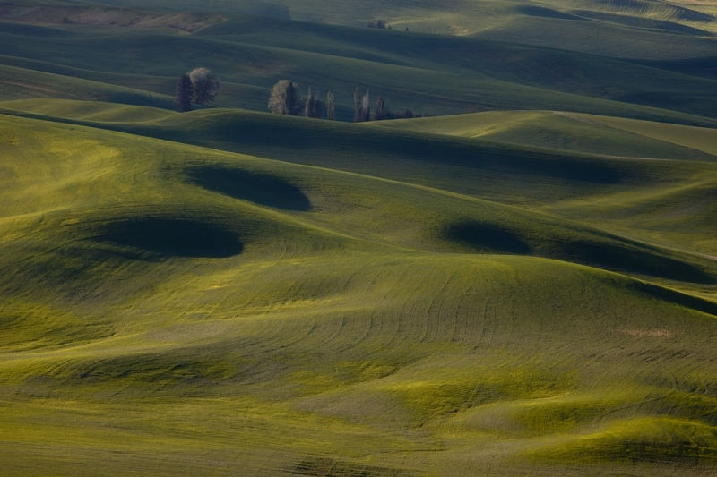 Eyes of the palouse